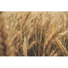 Pšeničná múka polohrubá tmavá 1Kg